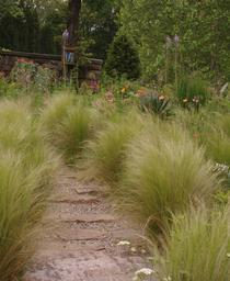 sesleria autumnalis autumn moor grass from pleasant run nursery. Black Bedroom Furniture Sets. Home Design Ideas