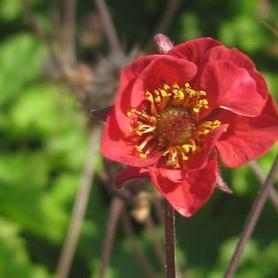 Geum x Flames of Passion