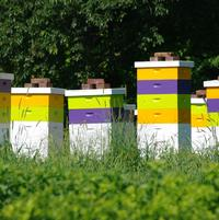 Beehives to help pollinate