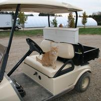 Electric golf cart batteries are charged by solar panels.