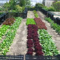 We have a total of 6 gardens (approximately 4,300 sq ft) at PRN which provide vegetables to employees